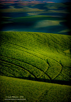Palouse Country 2014  #6