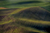 Palouse Country 2014 #8